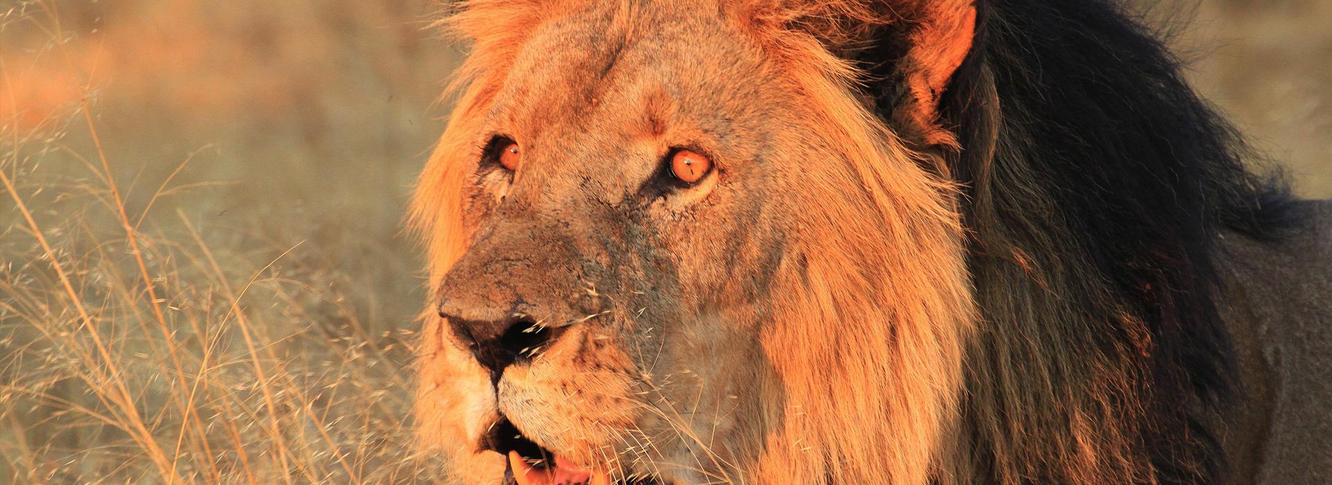 Botswana-Chobe—Game-Reserve1920x700