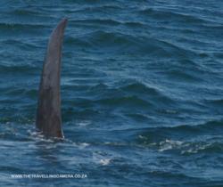 4 -  whale sightings (12)