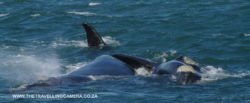 4 -  whale sightings (14)