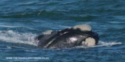 4 -  whale sightings (15)