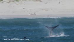 4 -  whale sightings (17)