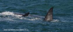4 -  whale sightings (19)
