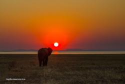 Kariba Elephant sunset (1)