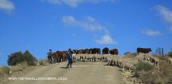 Mosheshs road Rhodes to Mountain Shadow Hotel (5)